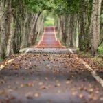 razones por las que los corredores prefieren correr en otoño